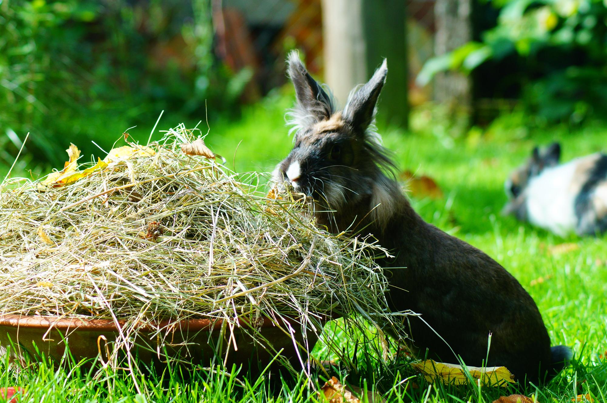 Heu kaninchenhilfe deutschland e v aktiv f r kaninchen for Kleine teichfische arten