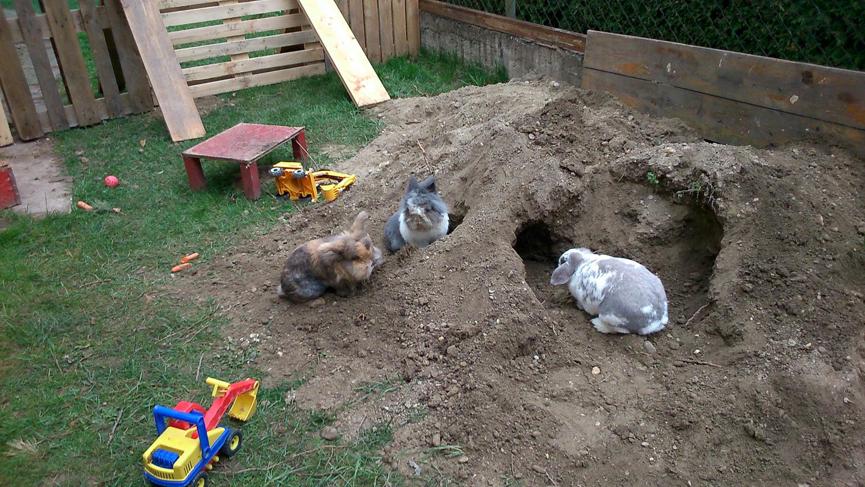 Beschäftigung kaninchenhilfe deutschland e v aktiv