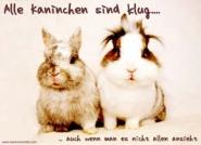Alle Kaninchen sind klug...