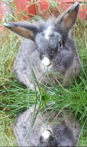 Willkommen bei der Kaninchenhilfe Deutschland e.V.