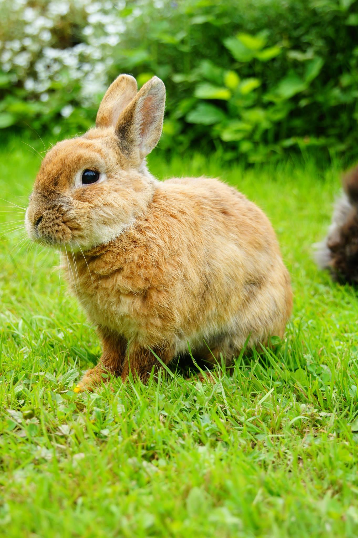Kaninchen Partner Gestorben